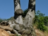 Jezeřské arboretum