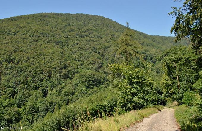 Lesy v okolí zámku Jezeří