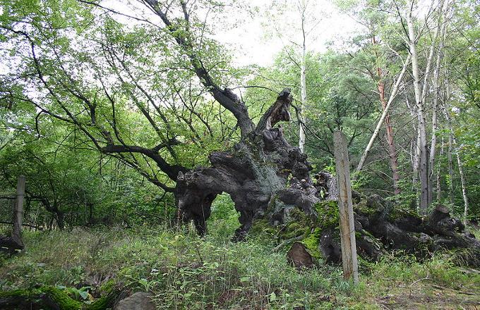 Cyklotrasa: Chomutov – zámek Jezeří